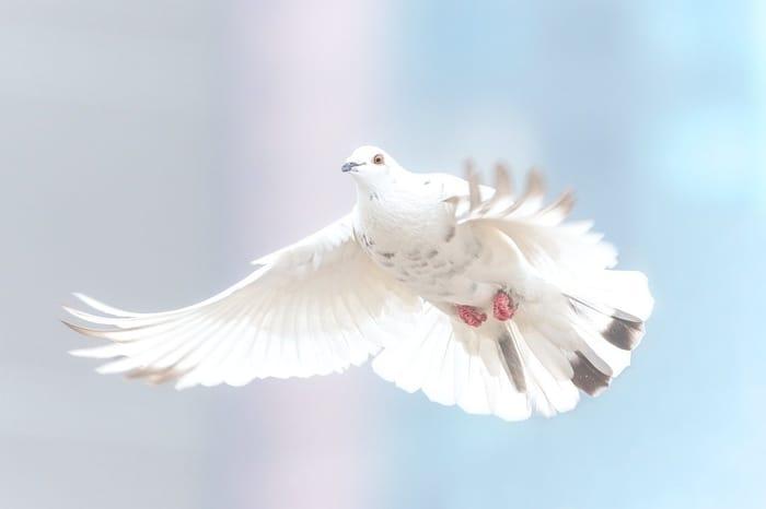 Mensagem espiritual do Anjo número 2121