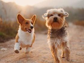 Quando um cachorro morre segundo o Espiritismo