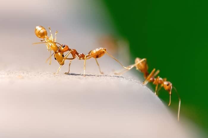 Qual o significado das formigas dentro de casa no espiritismo