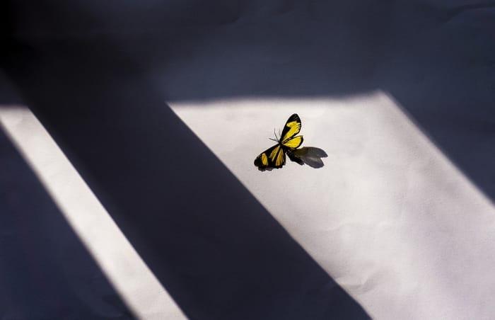 significado de borboleta dentro de casa
