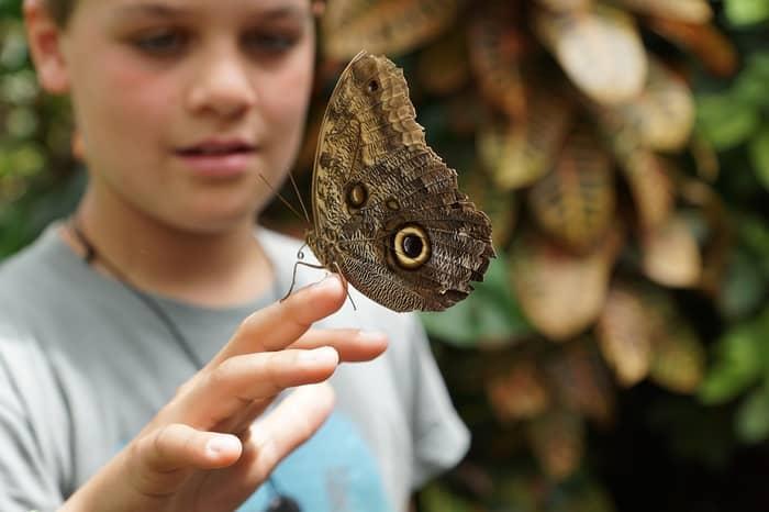 Significado de uma borboleta pousar numa pessoa