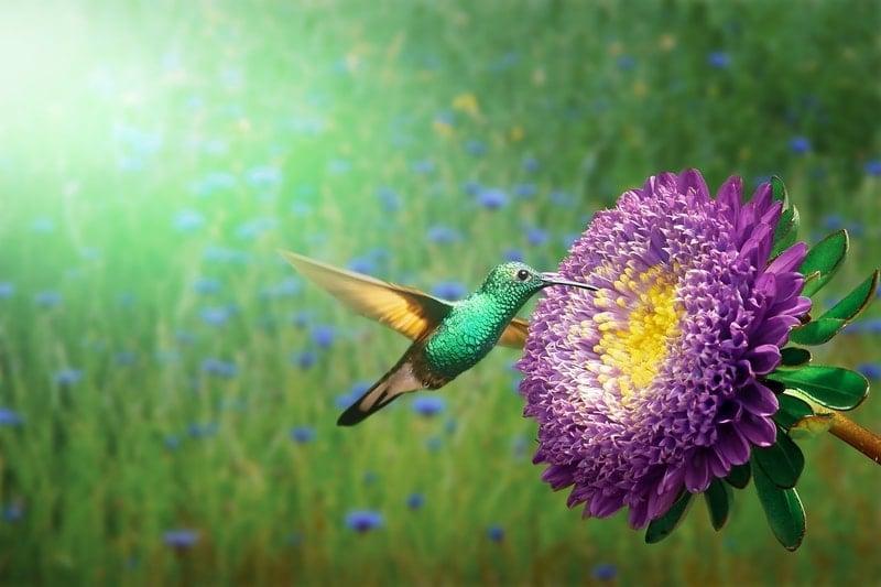 Significado do Beija Flor no espiritismo