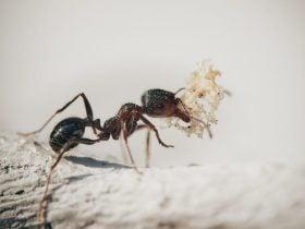 Significado de Formigas no Espiritismo | Dentro de Casa em 2020