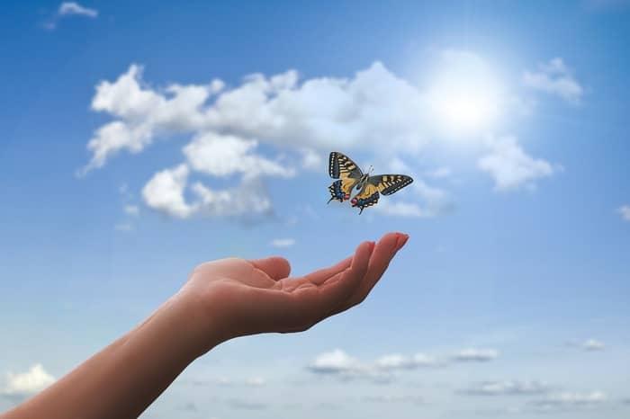 Significado espiritual da cor das borboletas