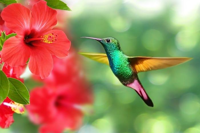 Qual é o significado do beija flor no espiritismo