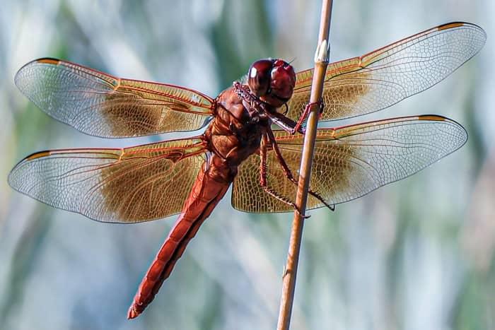 Qual o significado da libélula no espiritismo
