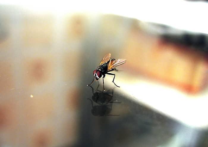 A macumba e as moscas