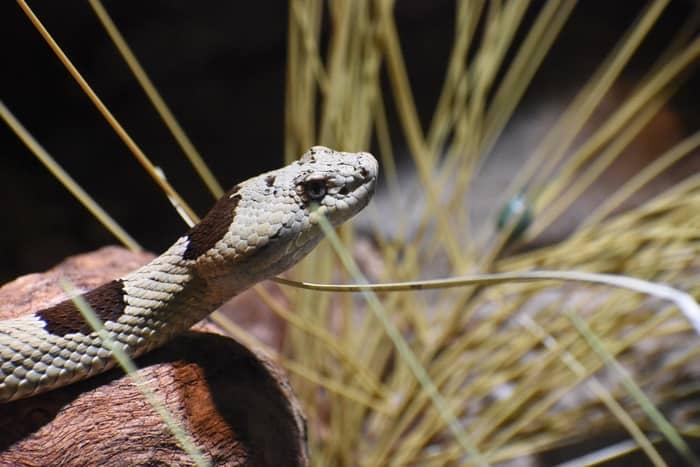 Medo espiritual da cobra: simbologia no espiritismo