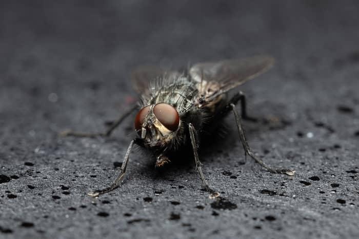 O significado das moscas na espiritualidade