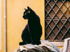 Significado Espiritual do Gato Preto | Eles são sensitivos?