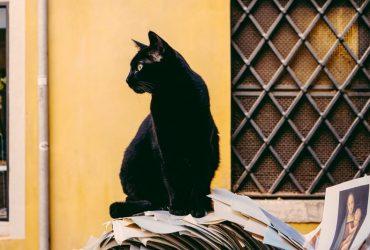Significado Espiritual do Gato Preto   Eles são sensitivos?