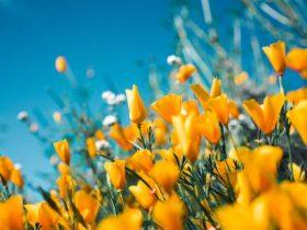 Sentir Cheiro de Rosas ou Flores | Foi do nada? O que significa!