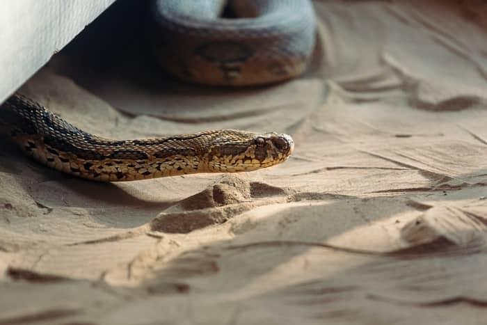 Encontrar uma cobra dentro de casa
