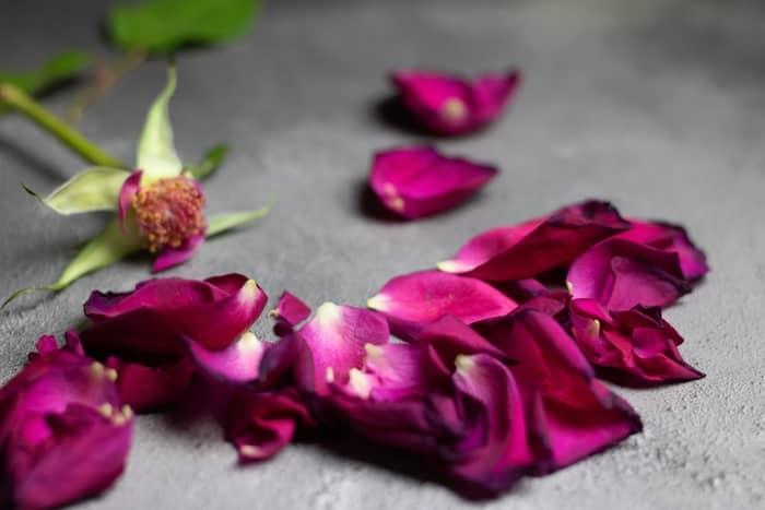 Exemplos de florais simples e poderosos