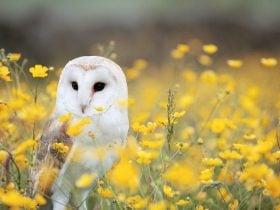 O que significa quando uma coruja aparece? De dia e de noite