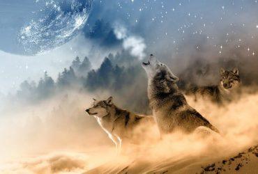 Porque os cachorros uivam, segundo o espiritismo? Significa morte?