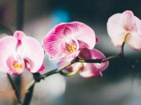 O Significado Espiritual da Orquídea: flor branca, roxa, azul e exótica