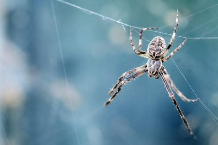 Significado Espiritual da Aranha e sua Teia: O animal do poder!