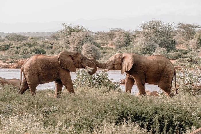 Os elefantes indicam sorte ou azar na nossa vida?