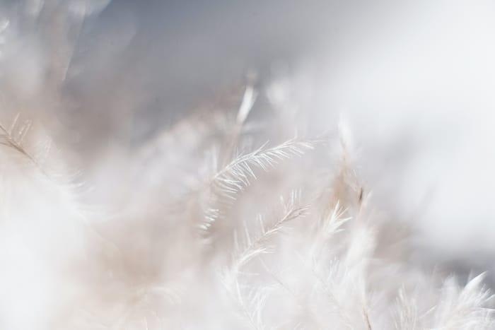 Conheça o Significado Espiritual da Alfazema e Lavanda: 2021