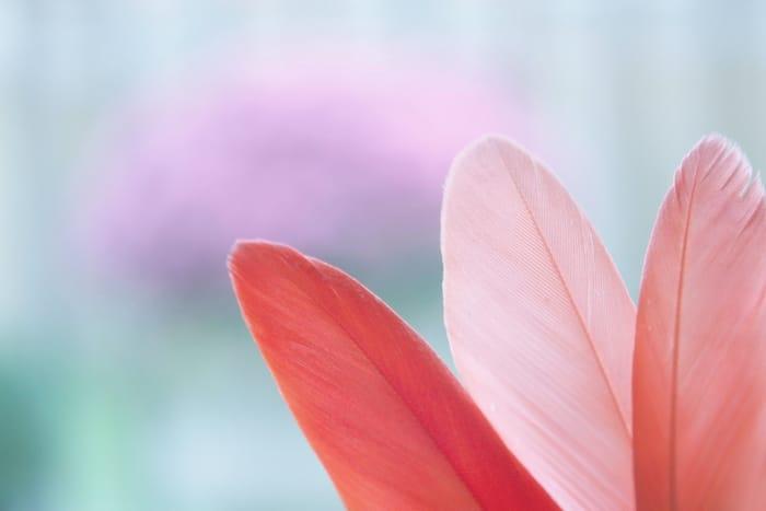 Significado espiritual da pena de acordo com a sua cor