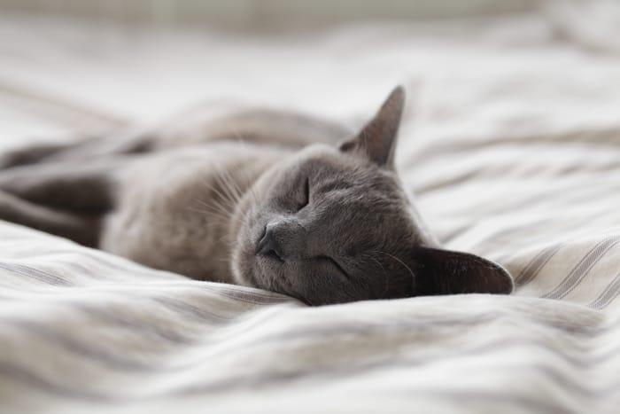 Qual é o significado espiritual das cores dos gatos?