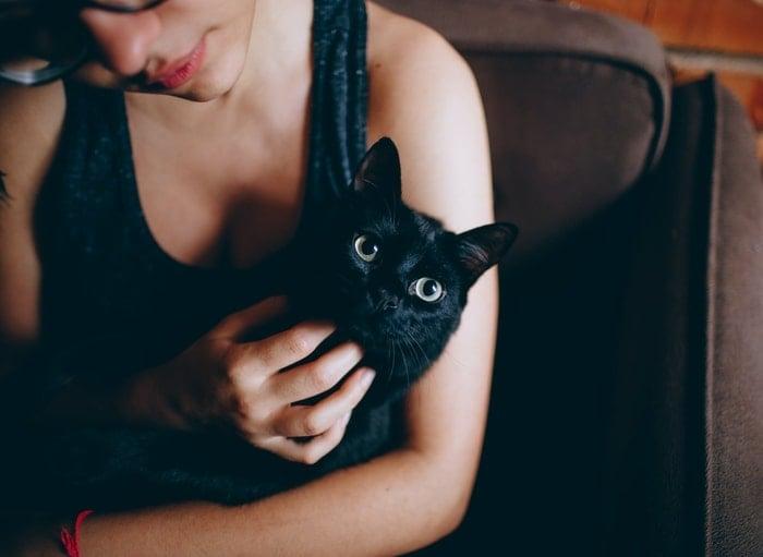 Significado Espiritual das Cores dos Gatos: A Energia das Cores!