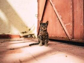 O que significa quando um gato se aproxima de você?