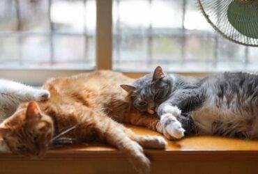 O que Significa Quando um Gato Morre no Espiritismo?