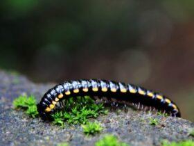Piolho de Cobra e Seu Significado Espiritual